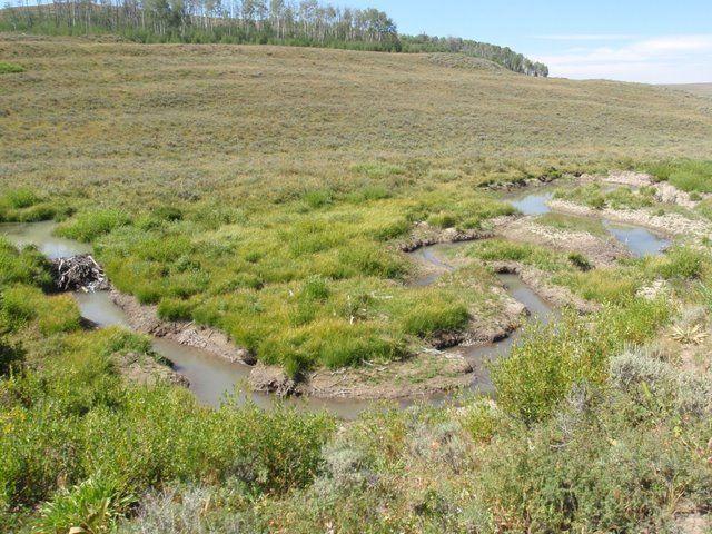 Beaver Pond Habitat