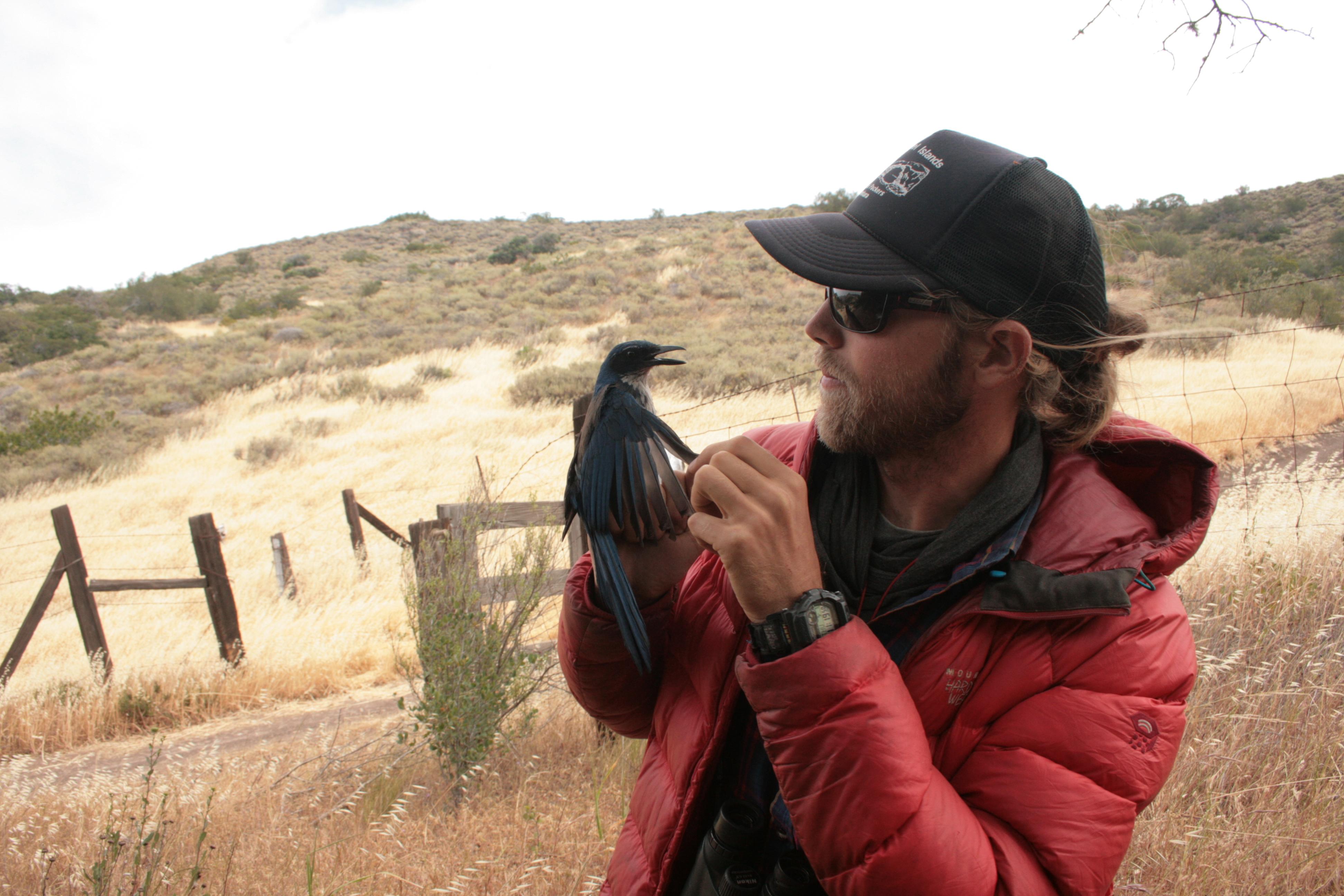 Michael Hague holding an Island Scrub-Jay
