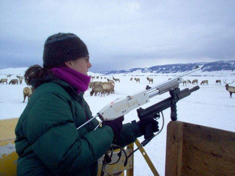 Vaccinating elk on the National Elk Refuge against brucellosis