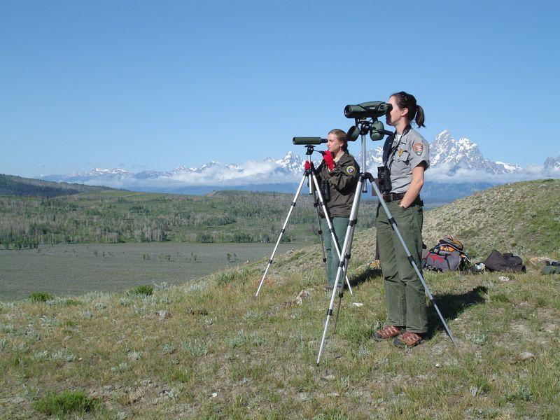 Monitoring wolves in Grand Teton National Park
