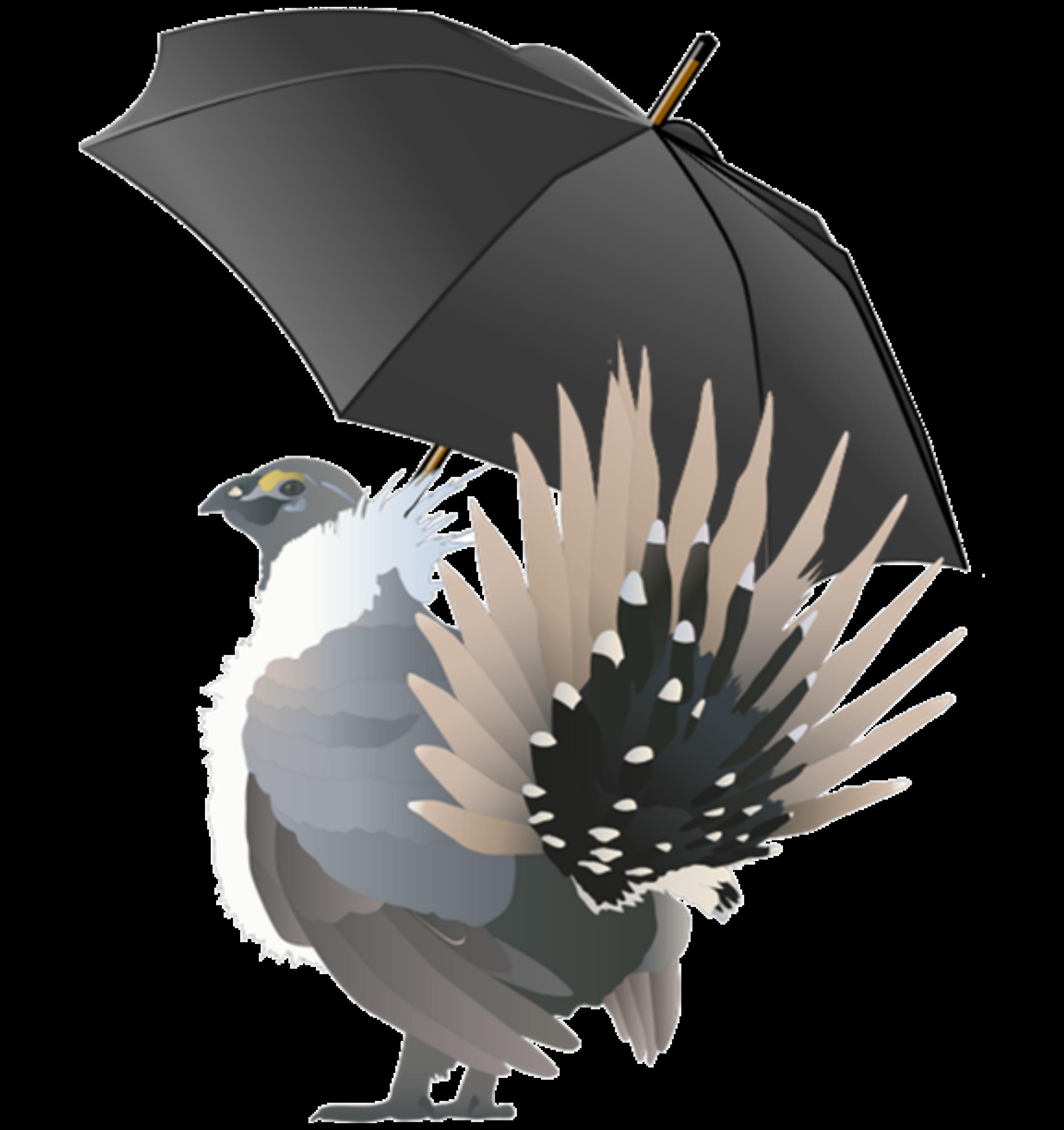sage-grouse umbrella