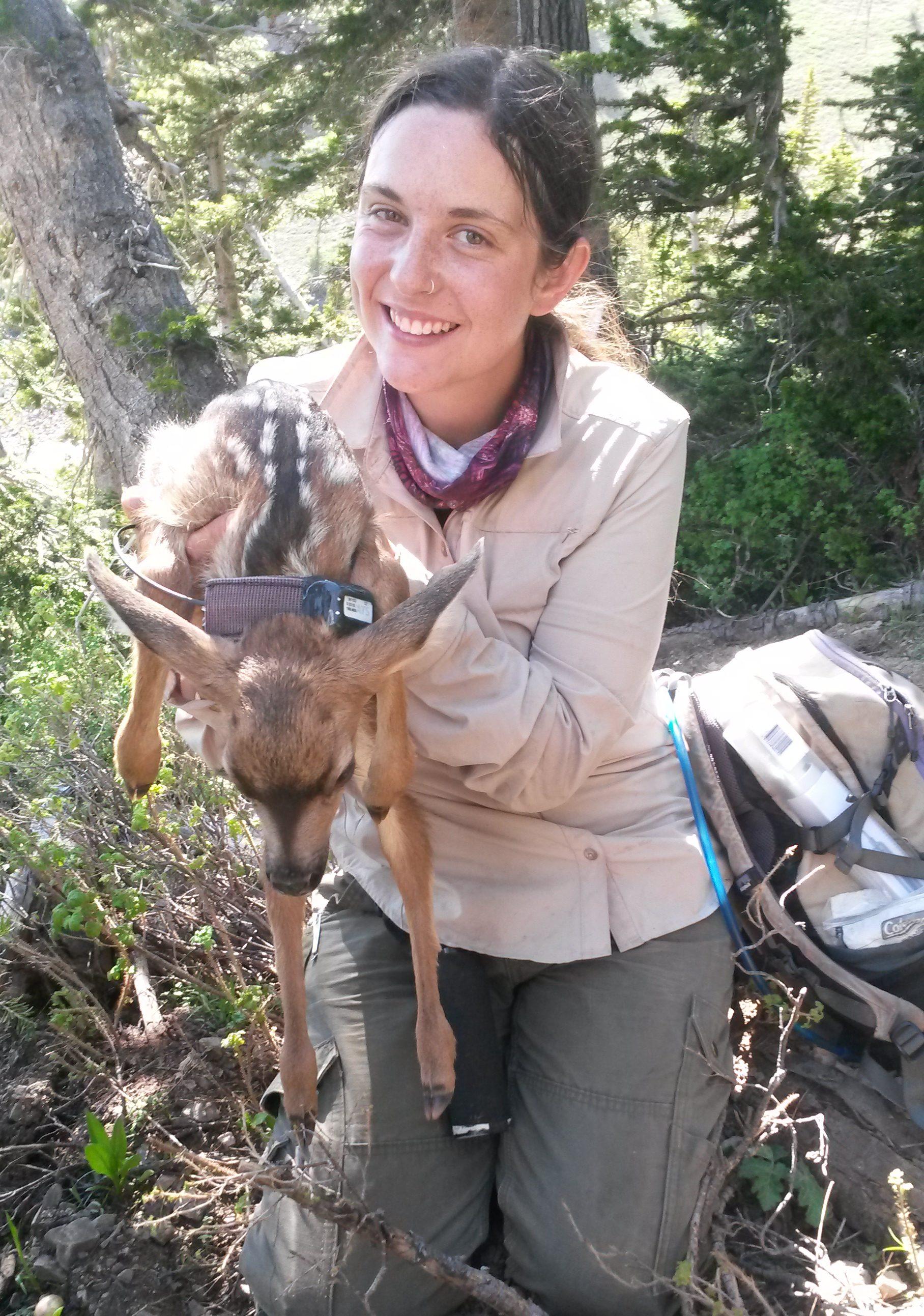 Jakopak holding a recently collared mule deer fawn.