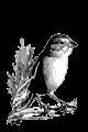 Chalfoun Lab logo