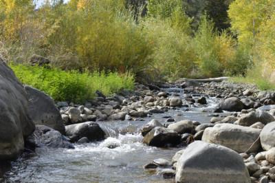 shoshone trout stream