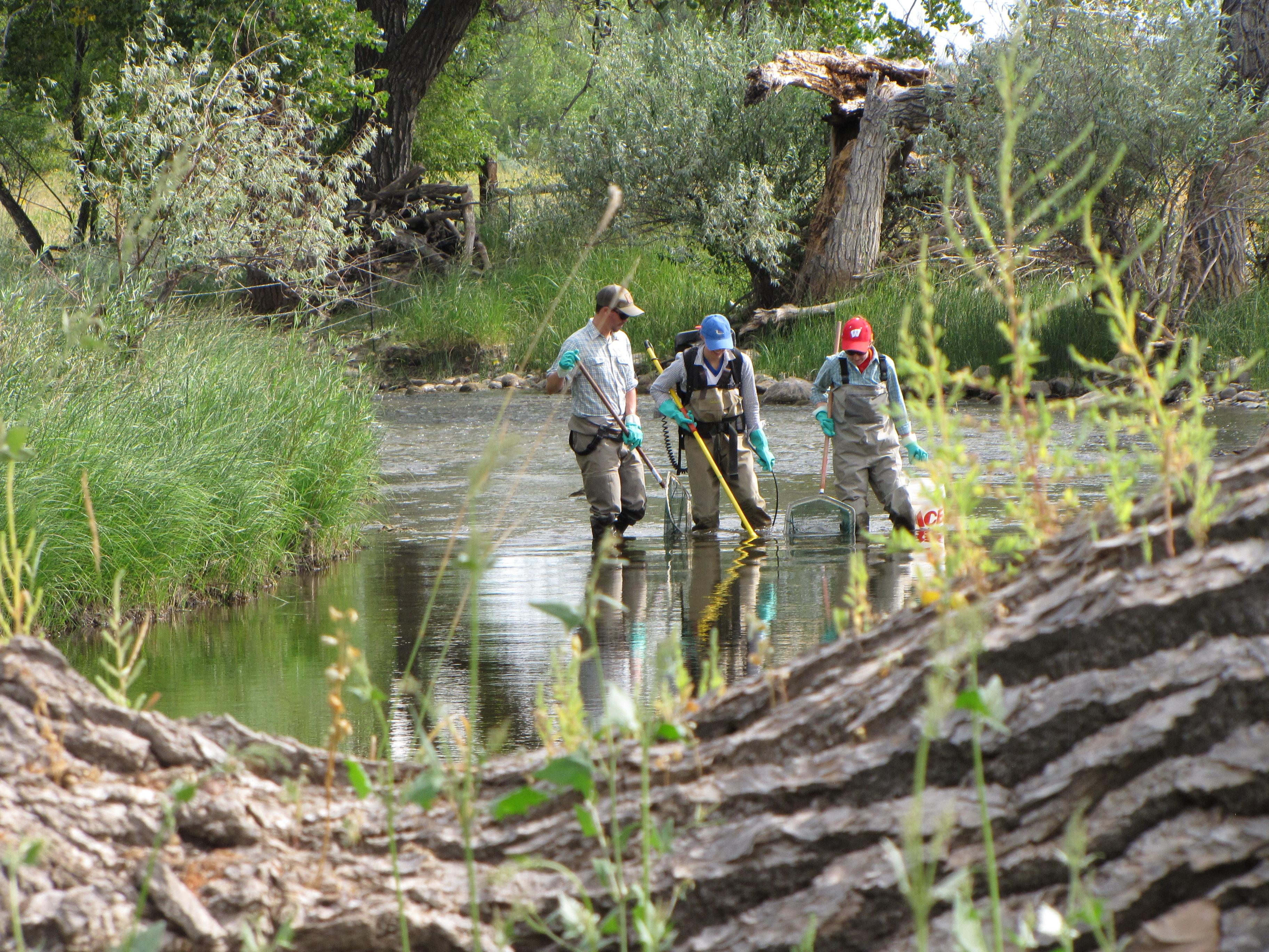 Caitlin Peterson, Brian Maitland, Eloise Zimbleman lectrofishing Laramie River