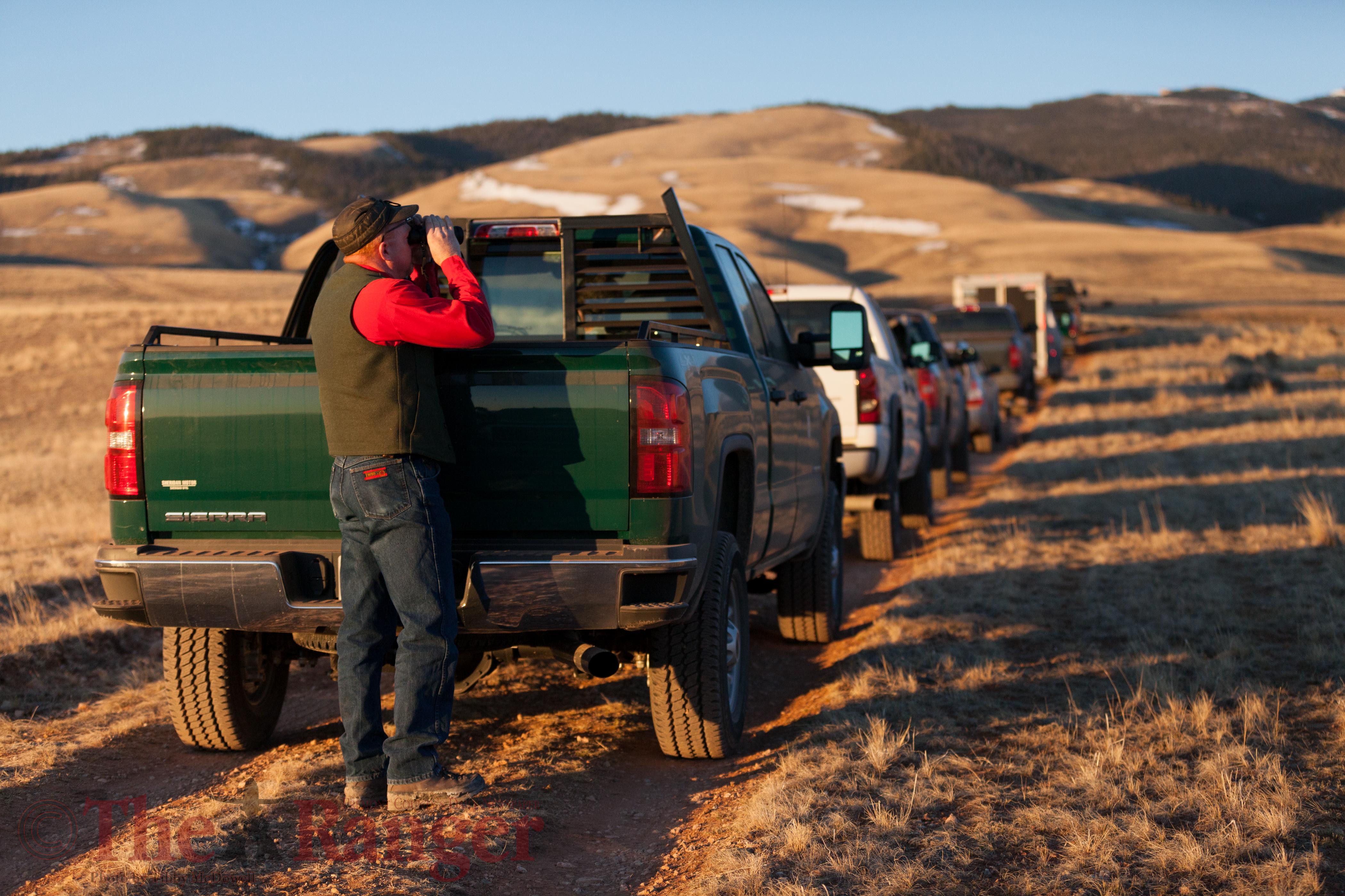 Daryl Lutz, scouting bighorn sheep during captures.