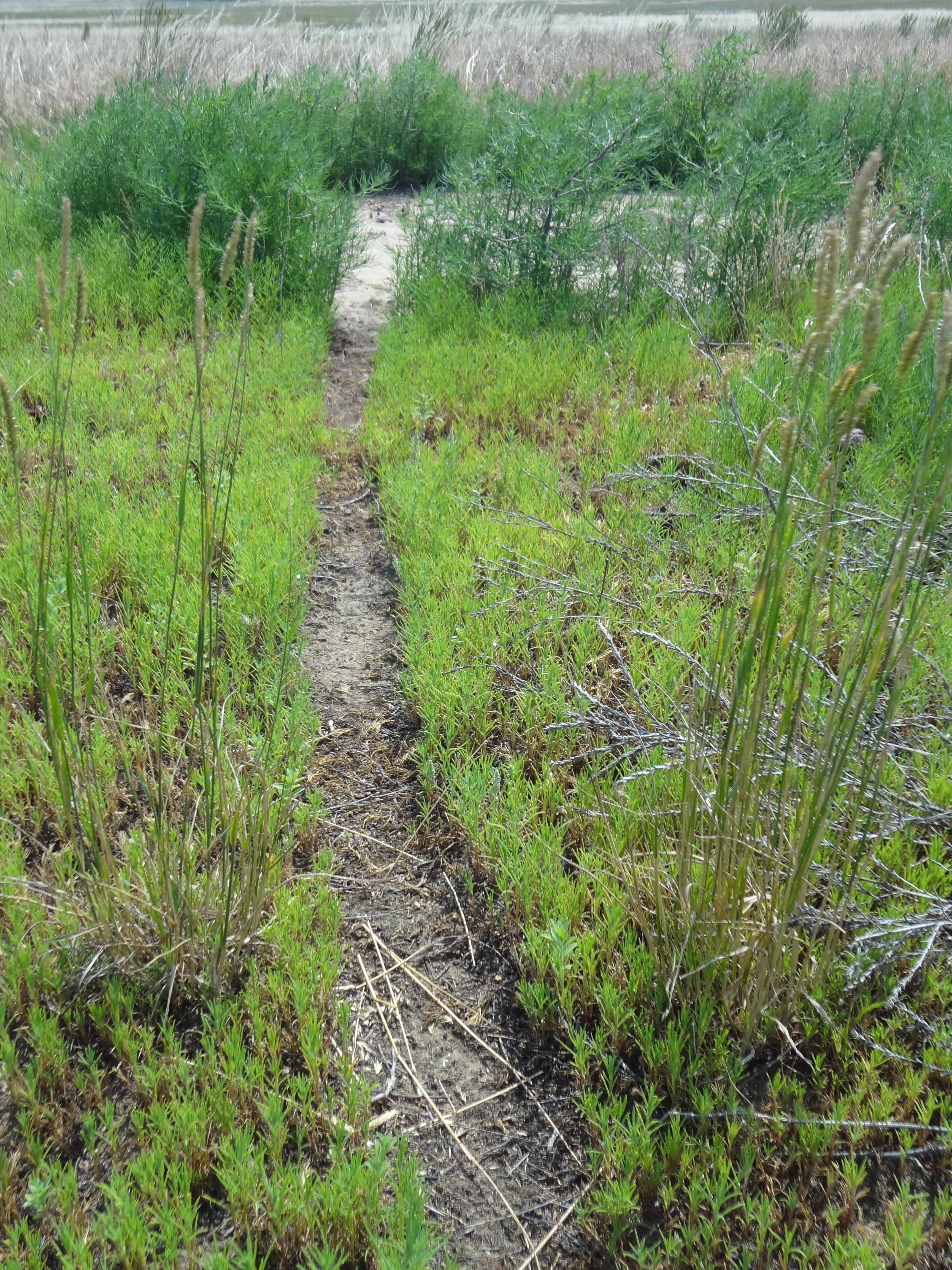 Rodent run, Thunder Basin National Grassland, WY
