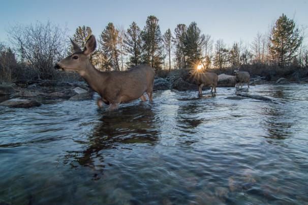Photo credit Joe Riis. Mule Deer Migration Project, Western Wyoming Red Desert to Hoback