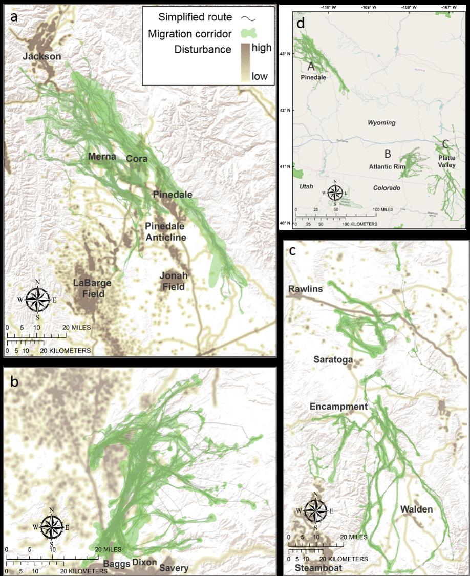 Migration and disturbance study area maps