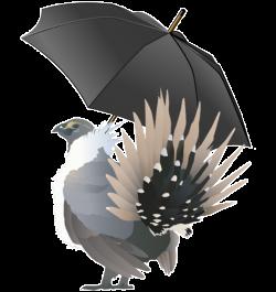 sage-grouse umbrella species